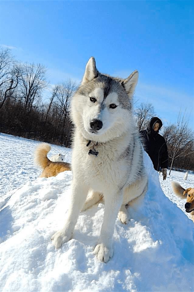 dog_boarding_kennel